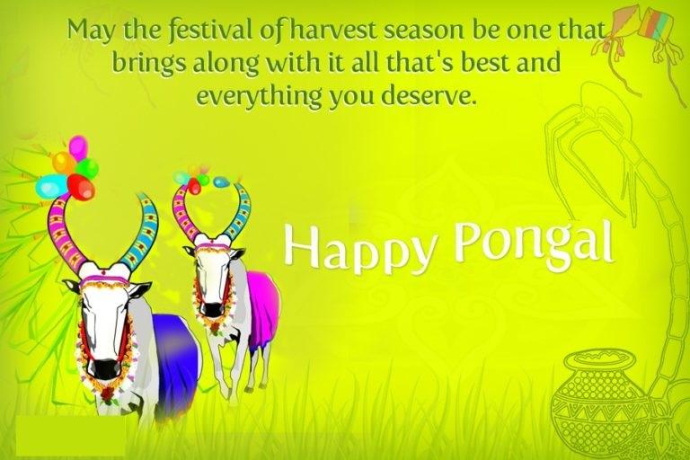 Happy Pongal Wallpapers For Desktop