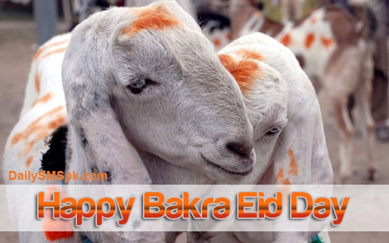 eid ul adha wallpapers for facebook
